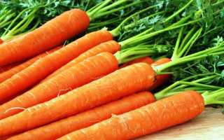 Зимние хранение моркови – сорта моркови, сладкие, крупные сорта