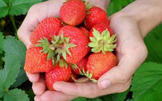 Ремонтантные сорта клубники: описание и выращивание