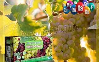 Внекорневая подкормка винограда: когда вносить и как готовить