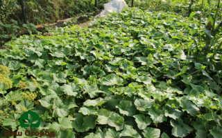 Ошибки выращивания огурцов: ТОП 6 грубых замечаний