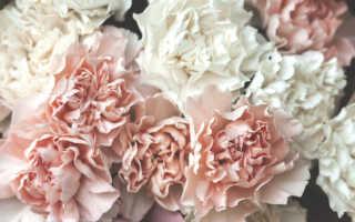 Нежные цветы: описания и характеристика цветов