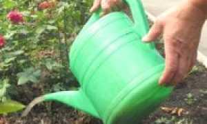 Чем подкормить розы: важные советы и описание удобрений
