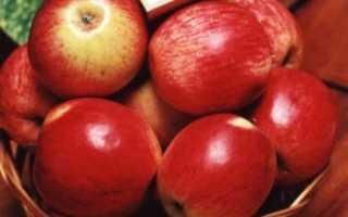 Яблоня Орловское полосатое: фото, описание, посадка, выращивание