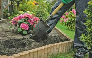 Как правильно посадить гортензию осенью и как ухаживать