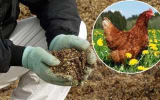 Подкормка огурцов куриным пометом в поле и в теплице: можно ли подкармливать овощи птичьим пометом, как правильно делать