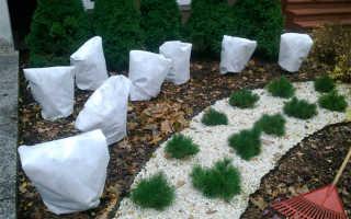 Когда, как и чем правильно укрывать растения на зиму