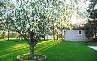 Яблоневый сад вашей мечты или Яблони в ландшафтном дизайне