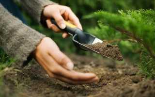 Чем подкормить можжевельник: виды удобрений