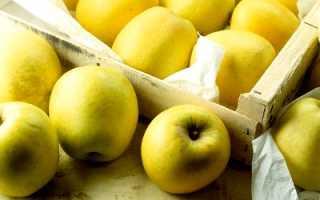 Яблоневый сад: советы по выращиванию на садовом участке!