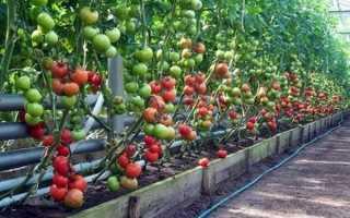 """Пинк Парадайз"", он же Pink Paradise – классификация сорта томатов"
