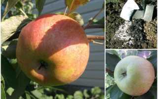 Яблоня Медуница: описание, фото, выращивание, уход, отзывы
