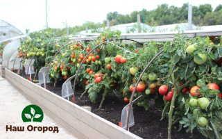 Выращивание помидоров при помощи рассады: раскрываем секреты!