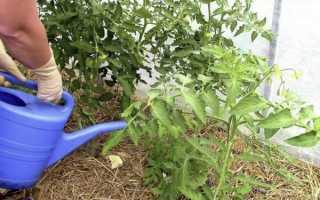 Подкормка помидор в теплице: чем и как правильно подкармливать