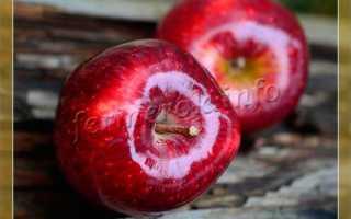 Яблоня красномясая: специфика разновидности, сорта и их описания