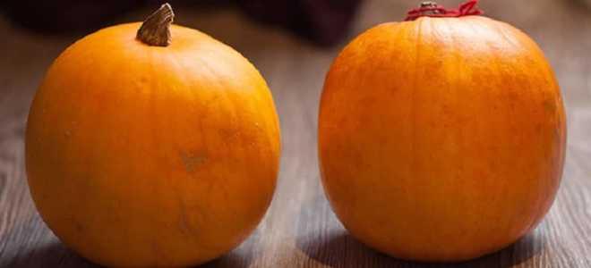 Тыква «Кустовая оранжевая» – описание, посадка и уход