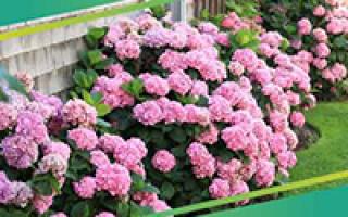 Цветы в саду: как украсить свой огород?
