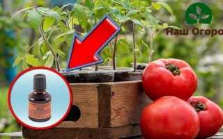 Подкормка томатов йодом: Реальное применение + видео