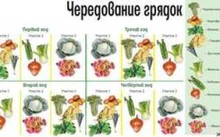 Севооборот овощей в огороде