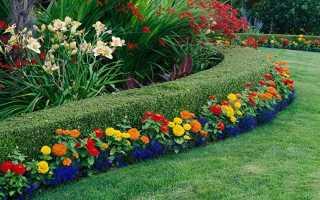 Многолетние цветы для дачи и сада, 26 видов + фото