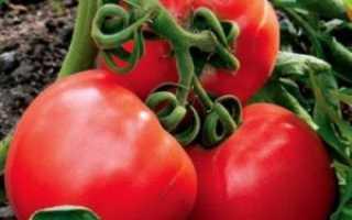 Томат Буденовка: описание сорта, размножение, выращивание