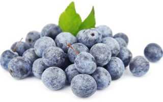 Терн: характеристика, особенности выращивания, применение плодов