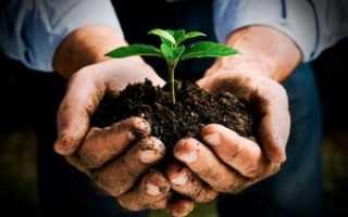 Как правильно вносить в почву удобрения