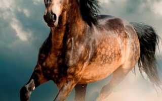 7 самых красивых лошадей в мире: фото, видео, описание породы