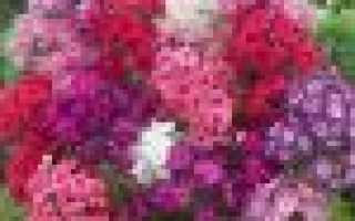 Многолетнее сгибание: посадочные, виды, размножение и особенности ухода