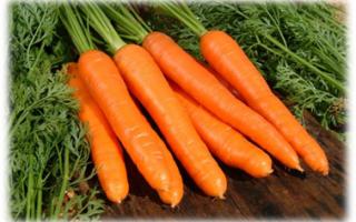 Полезные морковные свойства