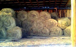 Сколько сена нужно быку на зиму, различия в зимних дозах