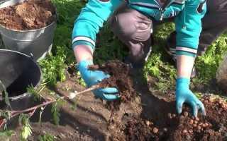Посадка рябины весной на участке: когда сажать, как правильно сажать то, что должно расти рядом, дальнейший уход за красной и черной рябиной