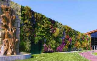 Вертикальный сад своими руками! + 6 лучших, фото
