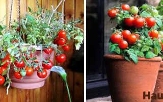 Комнатные помидоры: выращиваем богатый урожай дома!