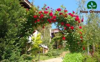 Арки на садовом участке: учимся возводить красоту вместе!