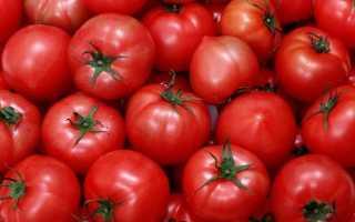 Поздние сорта помидоров для полевого выращивания: описание и фотографии