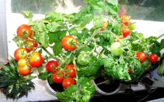 Томат Балкон Чудо – отзывы о выращивании, описание и фото, урожайность