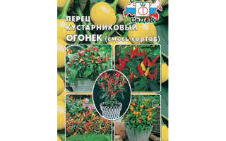 Перец Огонек – выращивание перца, уход, плюсы и минусы + фото