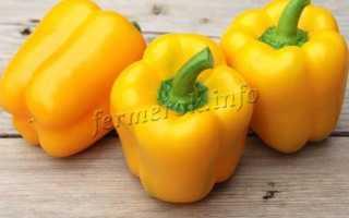 Перец желтый: сорта, их подробное описание. Правила выращивания