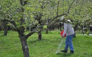 Удобрение плодовых деревьев агрохимикатами – особенности