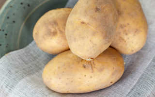 Картофель Великан – удивительно вкусный и урожайный сорт