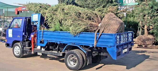 Перевозка саженцев и растений автомобильным транспортом