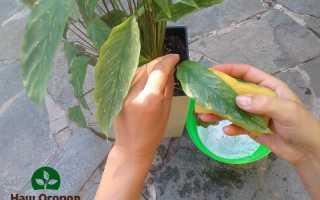 Хозяйственное мыло – применение в садоводстве