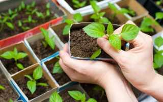Ростки – для начала! Подготовка семян перца, баклажанов и томатов к посеву   Сад   Крыша   Аргументы и факты