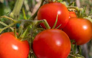 Бордосская смесь для томатов: применение, плюсы и минусы