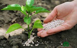Удобрение деревьев: раскрывае все секреты