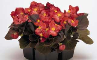 Комнатное растение: выращиваем и ухаживаем без хлопот!
