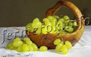 Виноград Лора: описание, особенности и уход за сортом