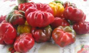 Перец Гогошары: фото, описание, виды, выращивание