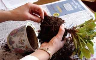 Уход за комнатными растениями: 5 правил весеннего ухода