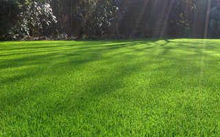 Устройство газона, посев, оформление + фотографии